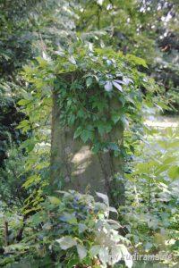 20160713 Unterliederbach Friedhof 02